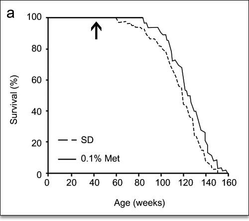 Supplementation with 0.1% Metformin