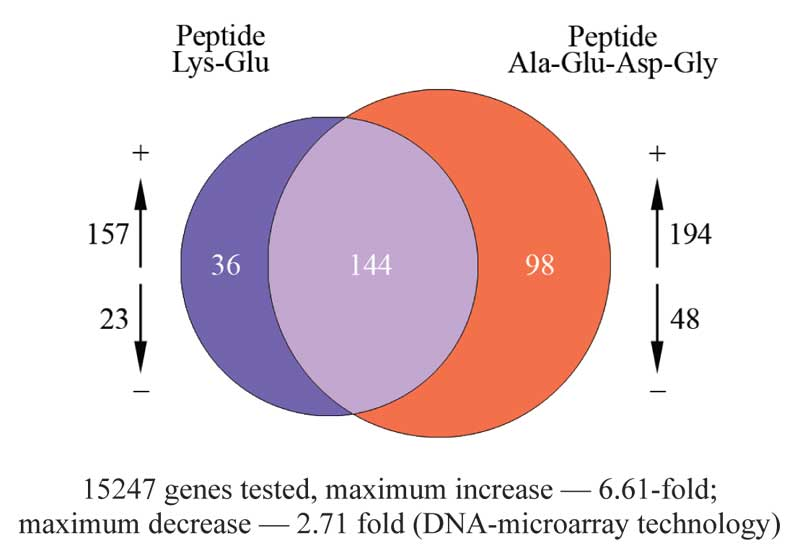 Peptide effect on gene expression
