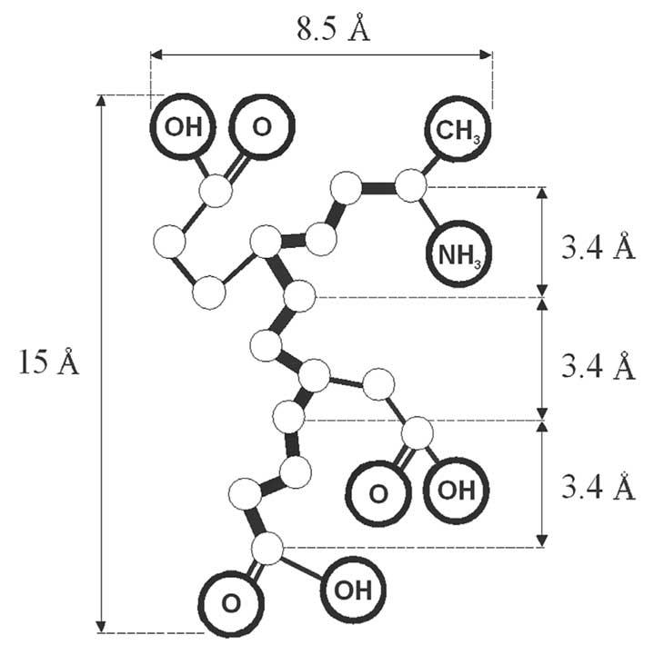 Unfolded peptide Ala-Glu-Asp-Gly