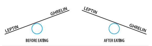 Figure 3: ghrelin and leptin