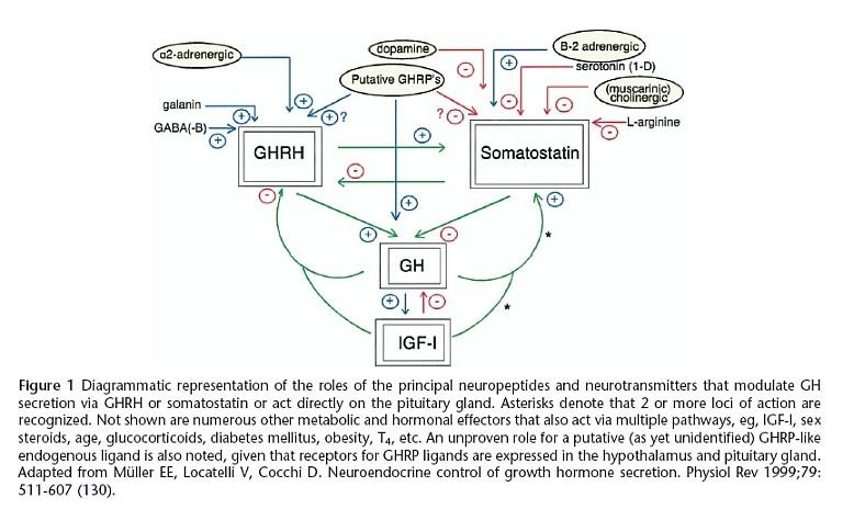 Stimulatory and inhibitory roles of neuropeptides and neurotransmitters